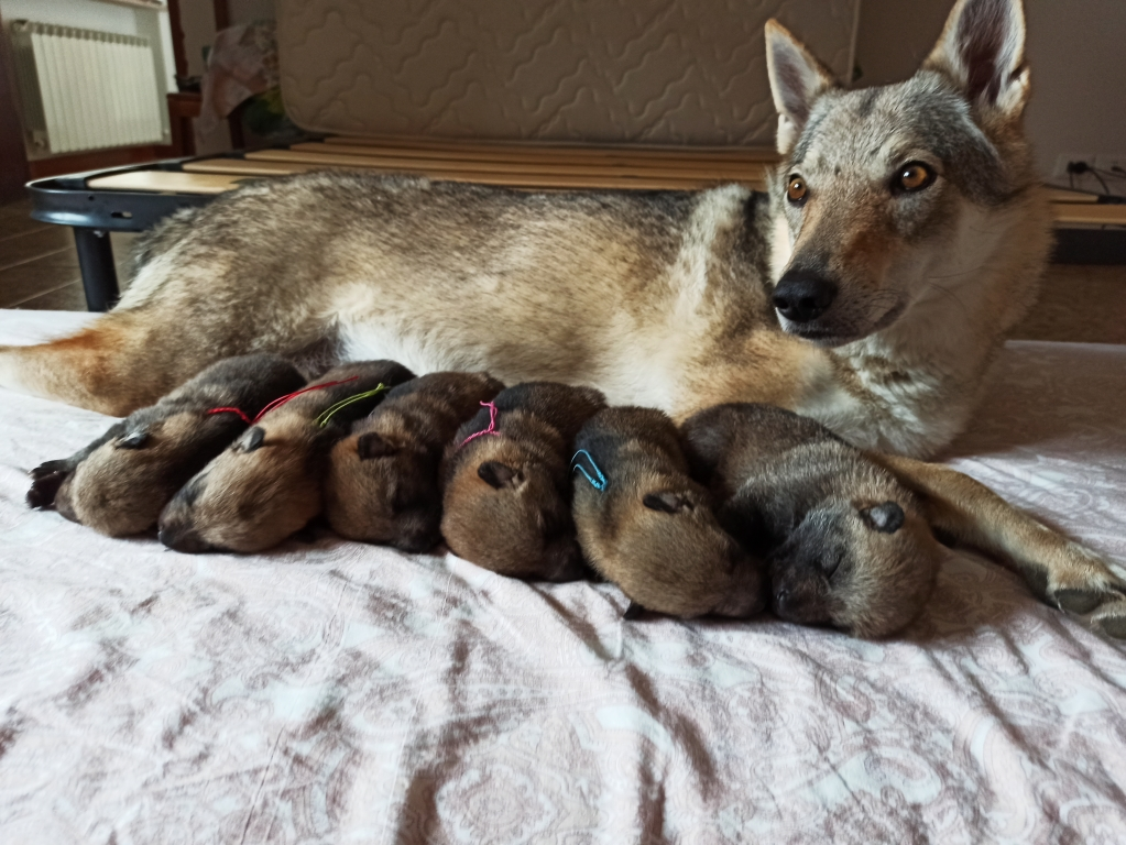 Finalmente sono arrivati i cuccioli di Nym e Arya - Gallery