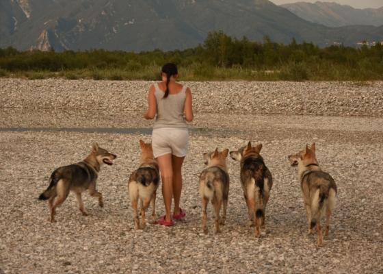 """Di quanto """"SPAZIO"""" ha bisogno un cane???"""